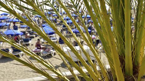 Njut av solljuset på Kanarieöarna i vinter.