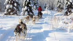 Prova häst och släde i Kanada om du vill ha variation från backarna.